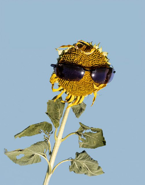 Project: Sunglasses 2nd Place by Susan Newlin